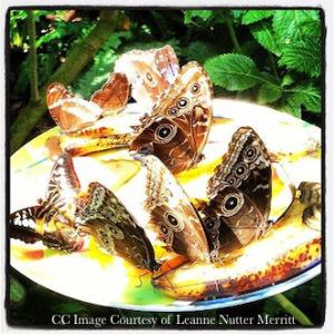 Leanne's Butterflies